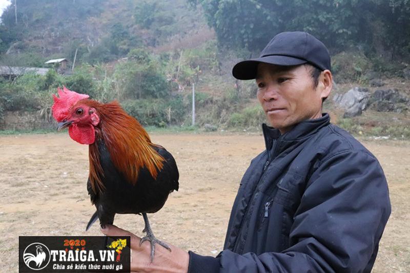 sư kê nổi tiếng trong làng