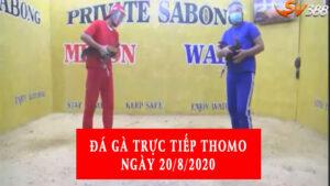 Đá gà Thomo trực tiếp ngày 20/8/2020
