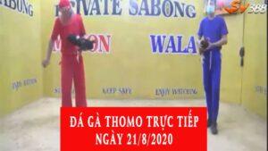 đá gà Thomo trực tiếp ngày 21/8/2020