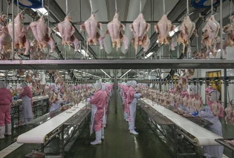Trung Quốc mở rộng sản xuất thịt gà một cách táo bạo