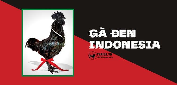 Gà đen Indonesia