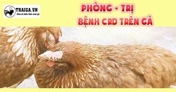 chữa trị bệnh crd ở gà hiệu quả