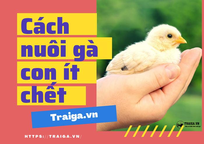cách nuôi gà con ít chết