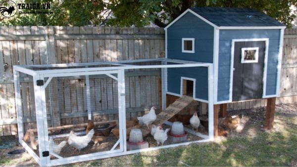 Lưu ý về cách làm chuồng gà đơn giản tại nhà