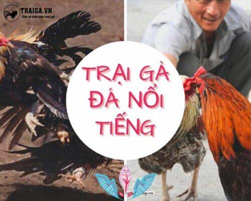 Cập nhật trại gà đá nổi tiếng bán giống uy tín toàn Việt Nam mới nhất