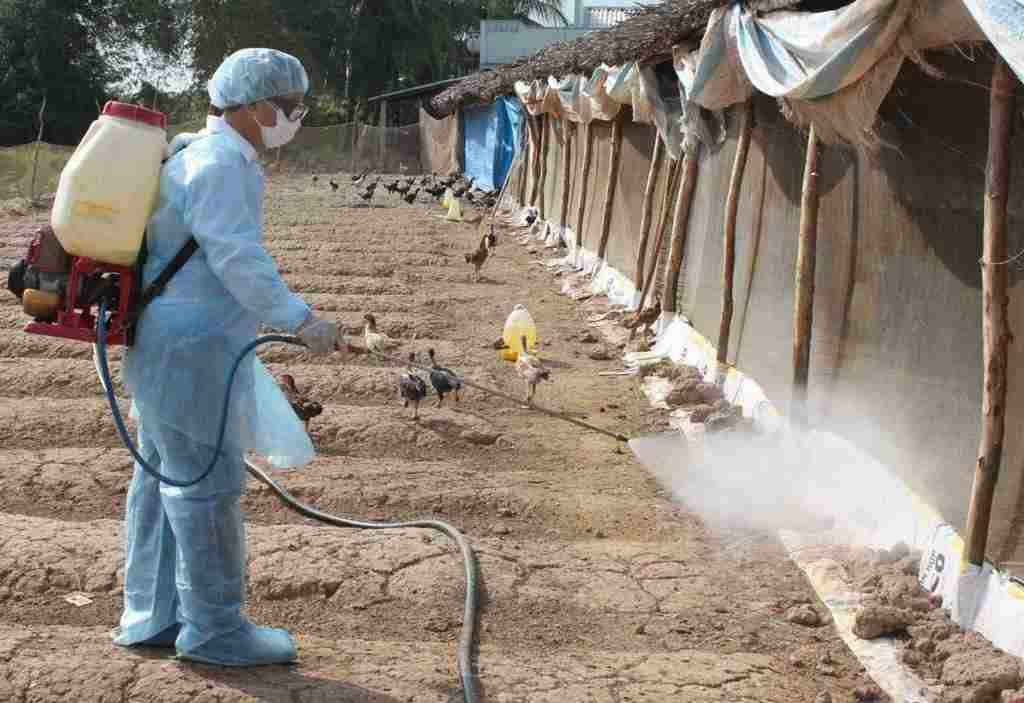 bệnh thường gặp ở gà