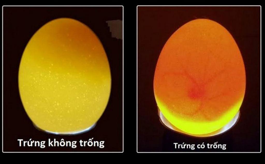 Cách bảo quản trứng gà
