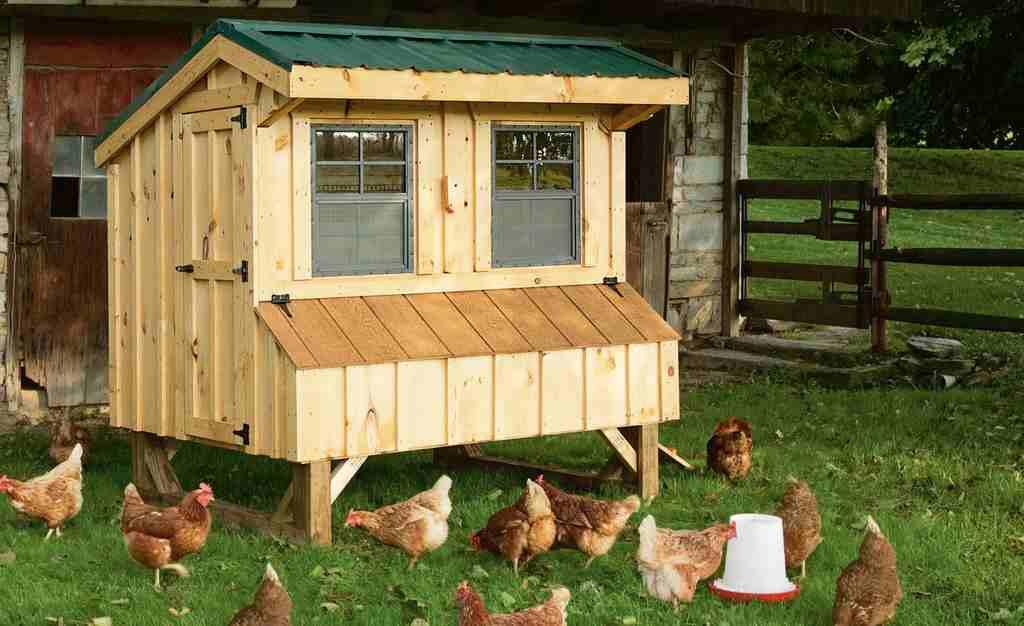 cách làm chuồng gà