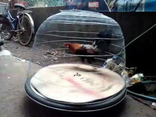 Cách làm máy tập chạy cho gà