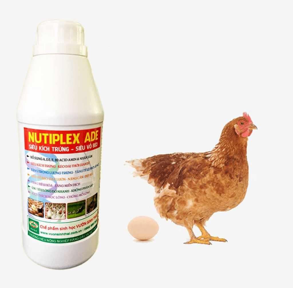 vitamin tổng hợp cho gà
